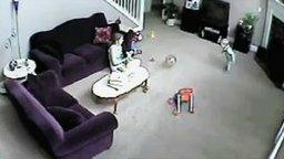 Смотреть Кошка мстит за разбитую миску