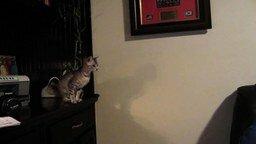 Неудачный прыжок котёнка смотреть видео прикол - 0:18