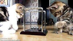 Котята-физики смотреть видео прикол - 1:27