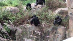 Смотреть Енот против обезьян