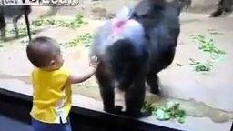 Малыш и обезьяний зад смотреть видео прикол - 1:15
