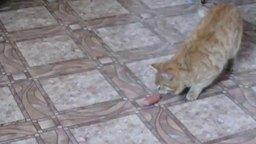 Смотреть Рыжий кот с сосиской