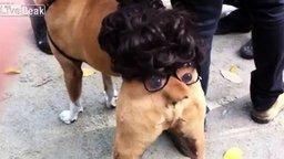 Смотреть Живая собачья попа