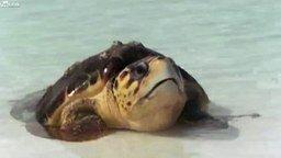 Агрессивная черепаха смотреть видео прикол - 0:50