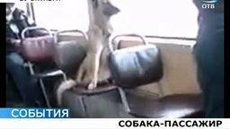 Смотреть Собака-пассажир