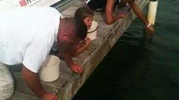Смотреть Рыба чуть не откусила девочке руку