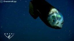 Рыба с прозрачным лицом смотреть видео прикол - 1:29