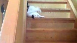 Ленивый спуск с лестницы смотреть видео прикол - 0:36