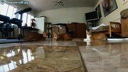 Смотреть Кошки против лазера