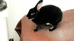 Внезапный кролик смотреть видео прикол - 0:11