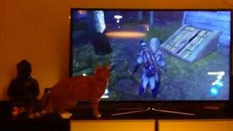 Кот в замешательстве смотреть видео прикол - 0:53