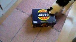 Кот против коробки смотреть видео прикол - 2:20