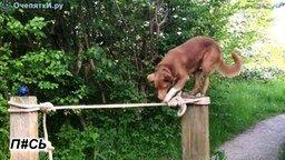 Собачье равновесие смотреть видео прикол - 0:42