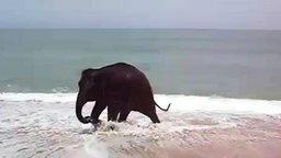 Смотреть Слонёнок играет с верёвкой