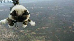 Смотреть Кошачий скайдайвинг