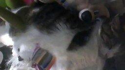Достань кота смотреть видео прикол - 1:17