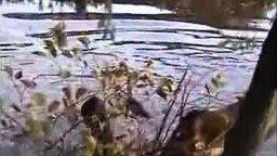 Упал с ветки в воду