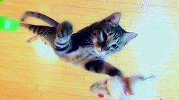 Смотреть Прыжки кота в высоту