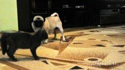 Смотреть Неожиданный манёвр от котёнка