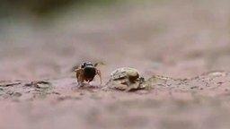 Паук против муравья смотреть видео прикол - 1:25