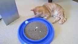 Идеальная игрушка для домашнего кота смотреть видео - 2:01