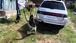 Дружок помогает мыть машину смотреть видео прикол - 0:54