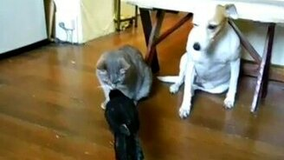 Смотреть Животные кормят друг друга