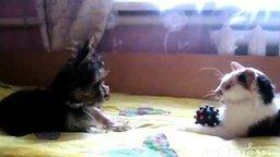 Смотреть Псинка против котяры