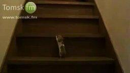 Хомяк на лестнице смотреть видео прикол - 1:08