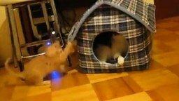 Это мой дом, чувак смотреть видео прикол - 0:54