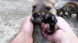 Массаж для маленького кенгуру смотреть видео прикол - 0:46