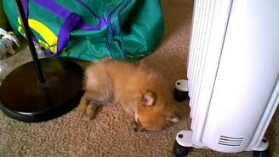 Смотреть Счастливый сон щенка