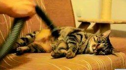 Смотреть Странный кот и пылесос
