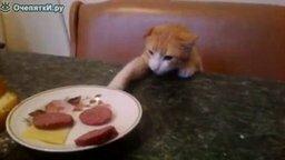 Смотреть Кот и колбаса