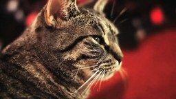 Смотреть Кот и тяжёлый рок