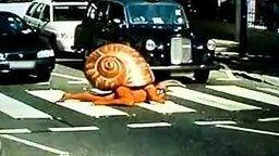 Улитка переползает дорогу смотреть видео прикол - 0:48