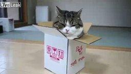 Смотреть Толстяк Мару против коробки