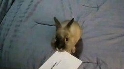 Кролик открывает письмо смотреть видео прикол - 0:27