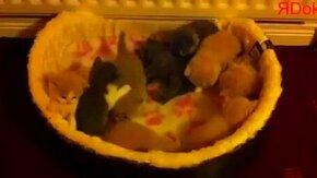 Маленькие котяшки смотреть видео прикол - 0:54
