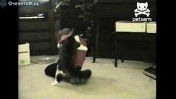 Смотреть Кот нападает на ребёнка