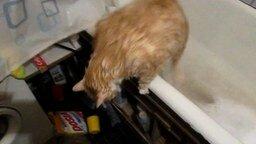 Кот слишком толстый... смотреть видео прикол - 1:22