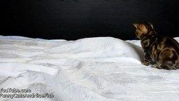 Смотреть Котёнок против призрака