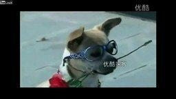 Собака со многими талантами смотреть видео прикол - 1:17