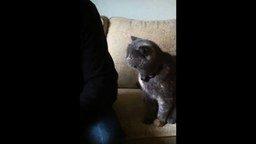 Смотреть Погладь кота