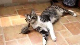 Смотреть Черепашка и котяра