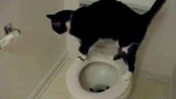 Смотреть Кот очищает унитаз