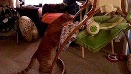 Кот баюкает малыша смотреть видео прикол - 0:12