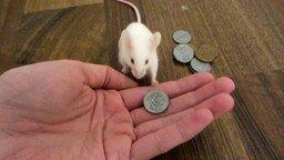 Умненькая мышка смотреть видео прикол - 0:33
