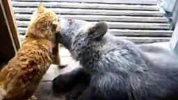 Кот против медведя смотреть видео прикол - 2:16