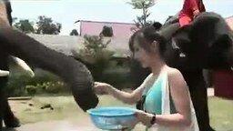 Смотреть Слон зажал телефон